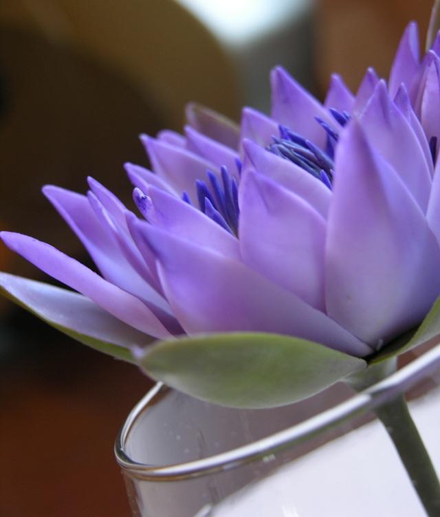листья лотоса чай для похудения отзывы